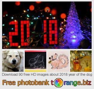 images free photo bank tOrange offers free photos from the section:  2018-year-dog