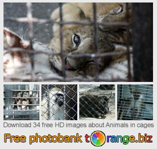 Image bank tOrange offers free photos from the section:  animals-cages