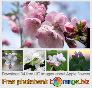 images free photo bank tOrange offers free photos from the section:  apple-flowers
