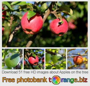 images free photo bank tOrange offers free photos from the section:  apples-tree