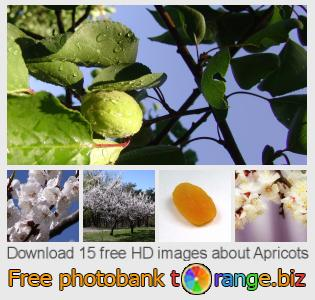 images free photo bank tOrange offers free photos from the section:  apricots