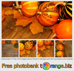 Image bank tOrange offers free photos from the section:  autumn-background-pumpkins-leaves