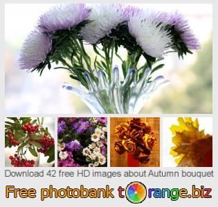 images free photo bank tOrange offers free photos from the section:  autumn-bouquet
