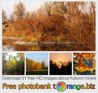 Image bank tOrange offers free photos from the section:  autumn-forest