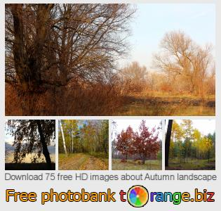 images free photo bank tOrange offers free photos from the section:  autumn-landscape
