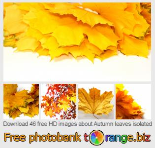 images free photo bank tOrange offers free photos from the section:  autumn-leaves-isolated