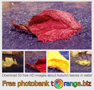 Image bank tOrange offers free photos from the section:  autumn-leaves-water