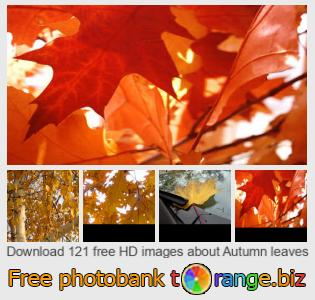 Image bank tOrange offers free photos from the section:  autumn-leaves