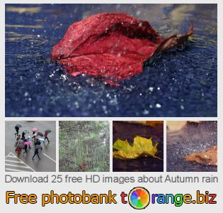 images free photo bank tOrange offers free photos from the section:  autumn-rain