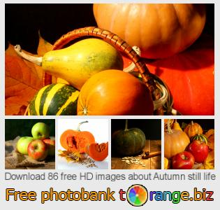 images free photo bank tOrange offers free photos from the section:  autumn-still-life