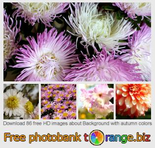 images free photo bank tOrange offers free photos from the section:  background-autumn-colors