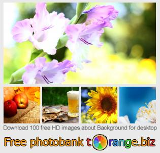 Image bank tOrange offers free photos from the section:  background-desktop