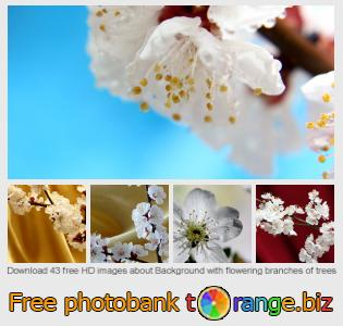 images free photo bank tOrange offers free photos from the section:  background-flowering-branches-trees