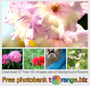 images free photo bank tOrange offers free photos from the section:  background-flowers