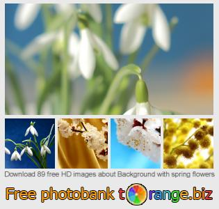 images free photo bank tOrange offers free photos from the section:  background-spring-flowers