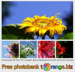 Image bank tOrange offers free photos from the section:  background-summer-flowers