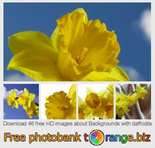 Image bank tOrange offers free photos from the section:  backgrounds-daffodils
