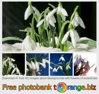 Image bank tOrange offers free photos from the section:  backgrounds-flowers-snowdrops