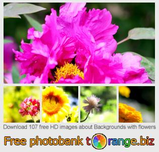 images free photo bank tOrange offers free photos from the section:  backgrounds-flowers