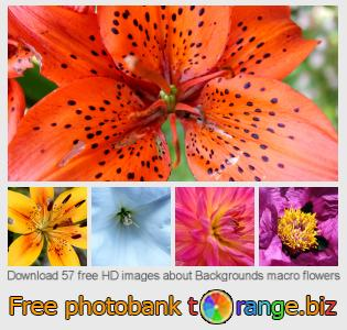images free photo bank tOrange offers free photos from the section:  backgrounds-macro-flowers