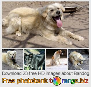 images free photo bank tOrange offers free photos from the section:  bandog