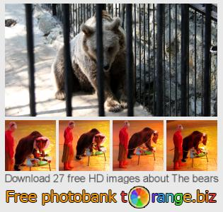 images free photo bank tOrange offers free photos from the section:  bears