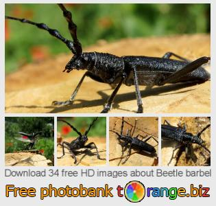 Image bank tOrange offers free photos from the section:  beetle-barbel