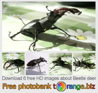 Image bank tOrange offers free photos from the section:  beetle-deer