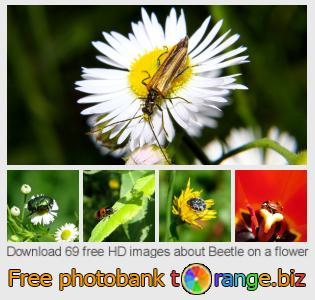 Image bank tOrange offers free photos from the section:  beetle-flower
