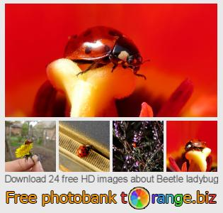Image bank tOrange offers free photos from the section:  beetle-ladybug