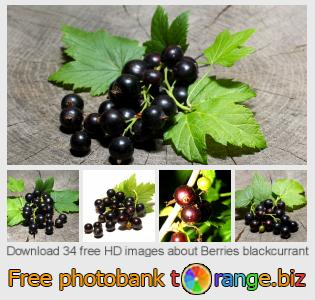 images free photo bank tOrange offers free photos from the section:  berries-blackcurrant