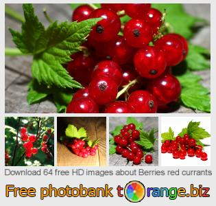 Image bank tOrange offers free photos from the section:  berries-red-currants
