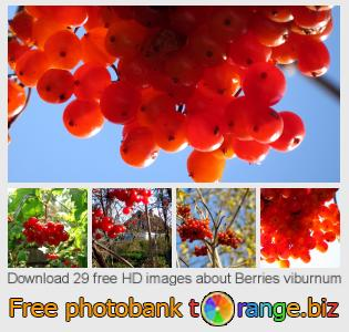 Image bank tOrange offers free photos from the section:  berries-viburnum