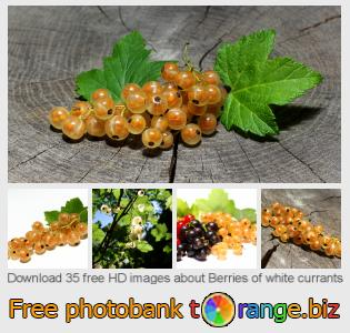 images free photo bank tOrange offers free photos from the section:  berries-white-currants
