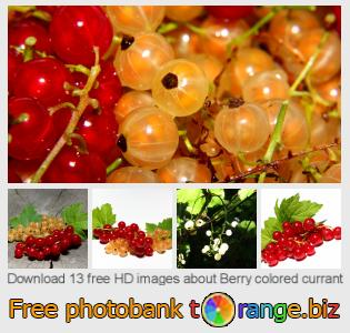 images free photo bank tOrange offers free photos from the section:  berry-colored-currant