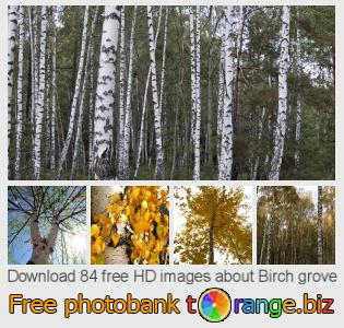 Image bank tOrange offers free photos from the section:  birch-grove