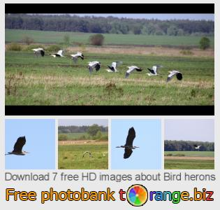 images free photo bank tOrange offers free photos from the section:  bird-herons
