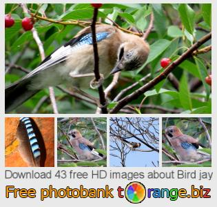 Image bank tOrange offers free photos from the section:  bird-jay