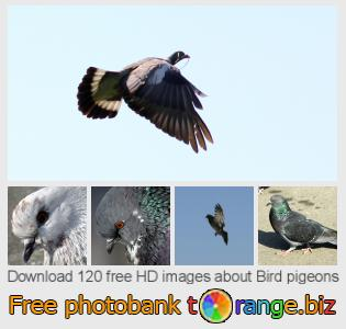 images free photo bank tOrange offers free photos from the section:  bird-pigeons