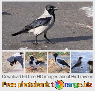 images free photo bank tOrange offers free photos from the section:  bird-ravens