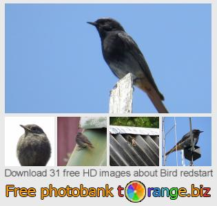 Image bank tOrange offers free photos from the section:  bird-redstart