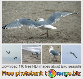 Image bank tOrange offers free photos from the section:  bird-seagulls