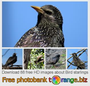 Image bank tOrange offers free photos from the section:  bird-starlings