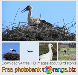 images free photo bank tOrange offers free photos from the section:  bird-storks