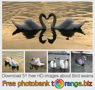 images free photo bank tOrange offers free photos from the section:  bird-swans