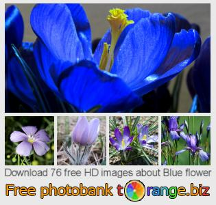 images free photo bank tOrange offers free photos from the section:  blue-flower