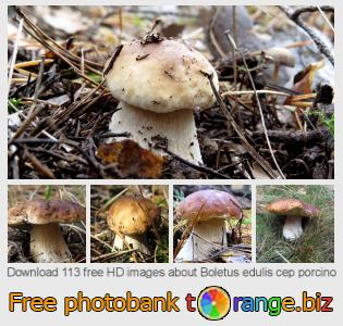 images free photo bank tOrange offers free photos from the section:  boletus-edulis-cep-porcino