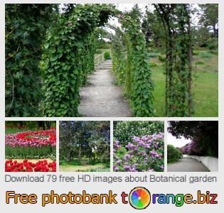 images free photo bank tOrange offers free photos from the section:  botanical-garden