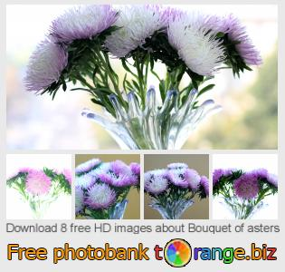 images free photo bank tOrange offers free photos from the section:  bouquet-asters