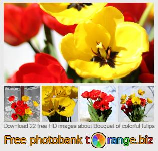 images free photo bank tOrange offers free photos from the section:  bouquet-colorful-tulips